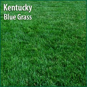 Kentucky Blue Grass Sod Billings